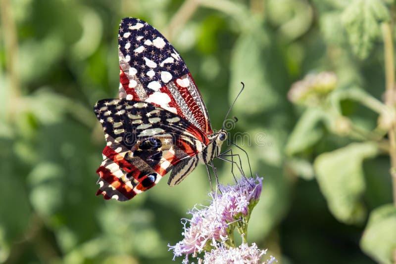 USA cytrus Swallowtail fotografia stock