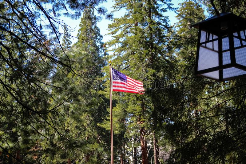 USA flag waving in Sequoia National Park, California stock image