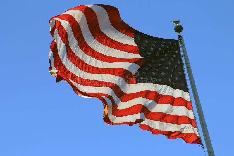 USA flagga på att vinka för pol arkivfoton