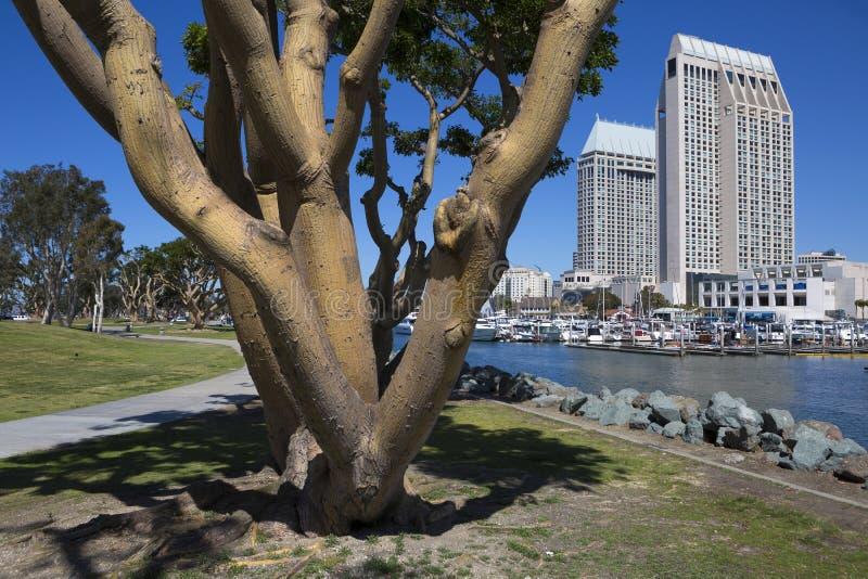 USA - Kalifornien - San Diego - embarcadero Jachthafenpark lizenzfreie stockfotografie