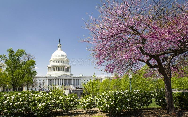 USA-Kapitolium i Washington DC på våren arkivfoto