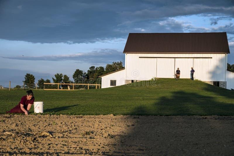 USA - Ohio, Amish - obraz royalty free