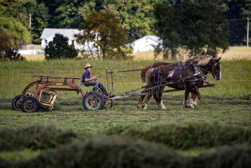 USA - Ohio, Amish - obrazy stock