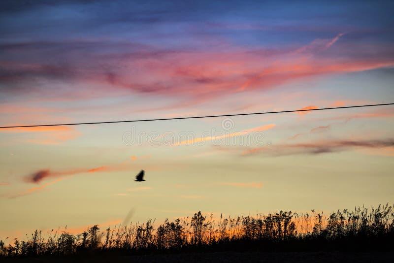 USA - Ohio, Amish - zdjęcie stock