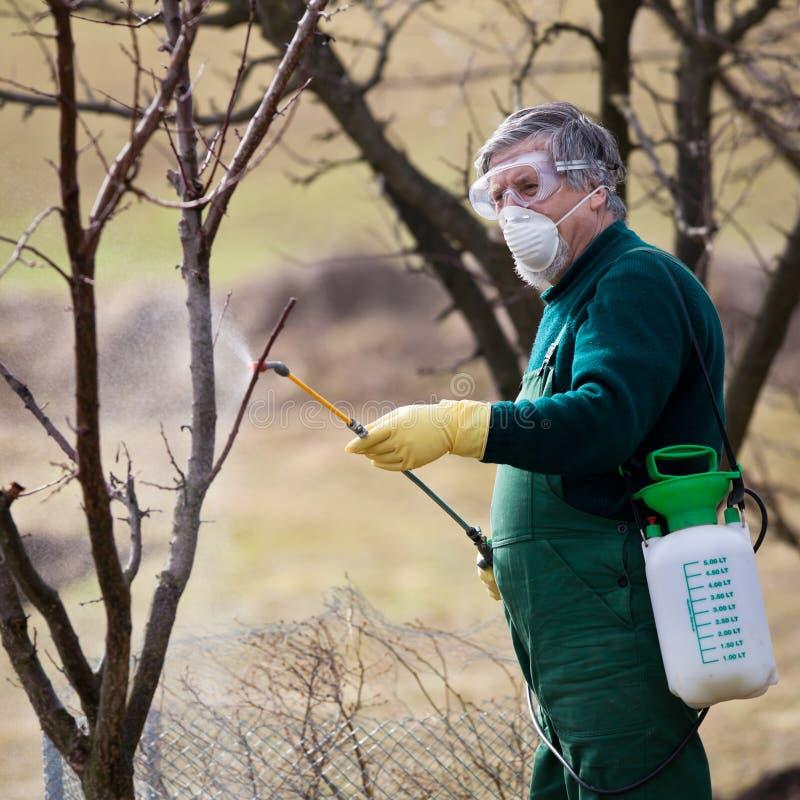 Usando produtos químicos no jardim/pomar imagem de stock royalty free