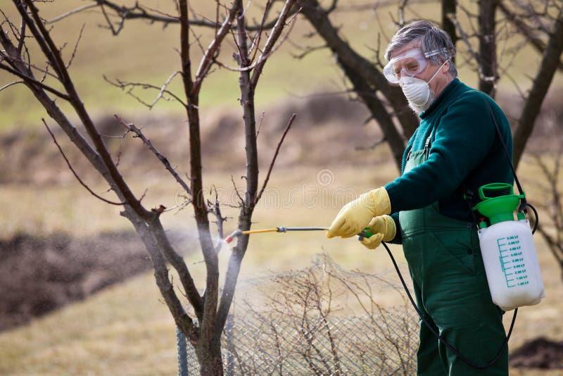 Usando produtos químicos no jardim/pomar fotografia de stock royalty free