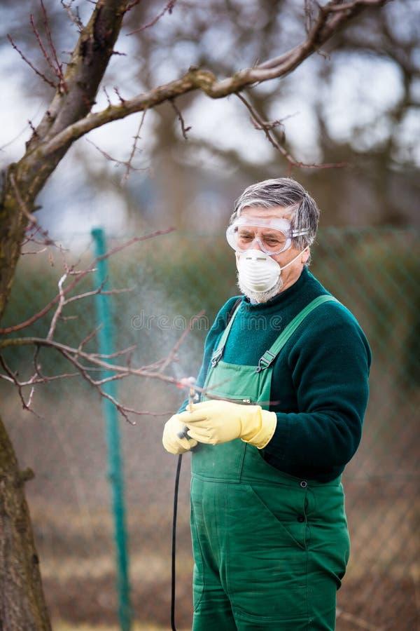 Usando produtos químicos no jardim/pomar fotos de stock