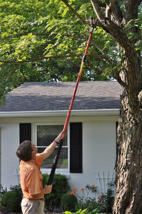Usando a tesoura de podar manual de Polo na árvore da jarda fotos de stock