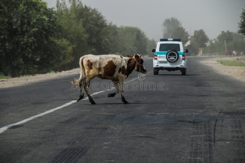 Usbekistan in der Termez-Region im Sommer von 2018 stockfotografie