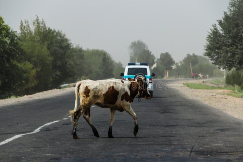 Usbekistan in der Termez-Region im Sommer von 2018 lizenzfreie stockfotografie