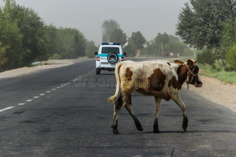 Usbekistan in der Termez-Region im Sommer von 2018 stockfoto