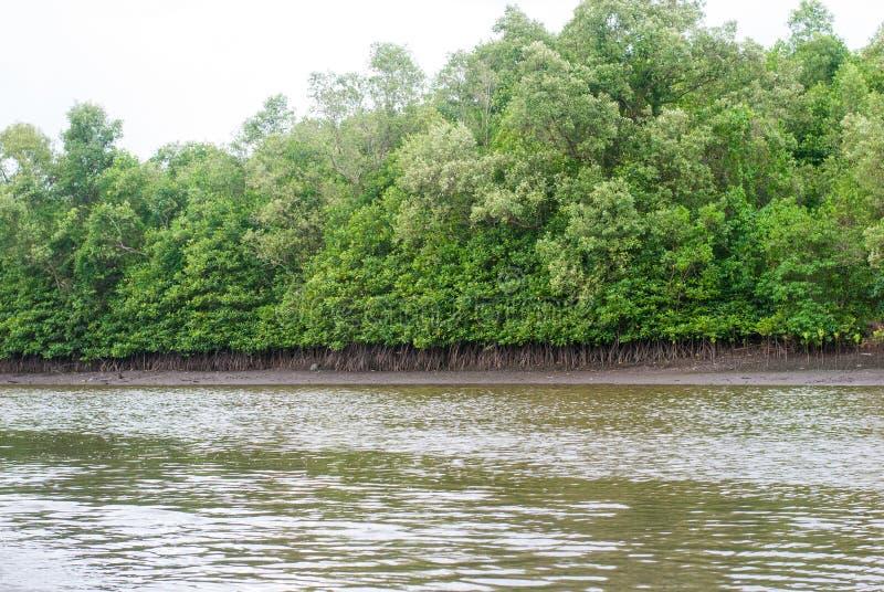 Uscita della foresta e dell'acqua salmastra della mangrovia all'oceano fotografia stock libera da diritti
