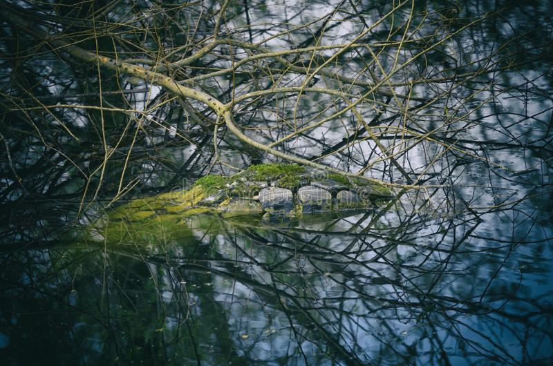 Used tire flooded in the pond illegally royalty free stock photography
