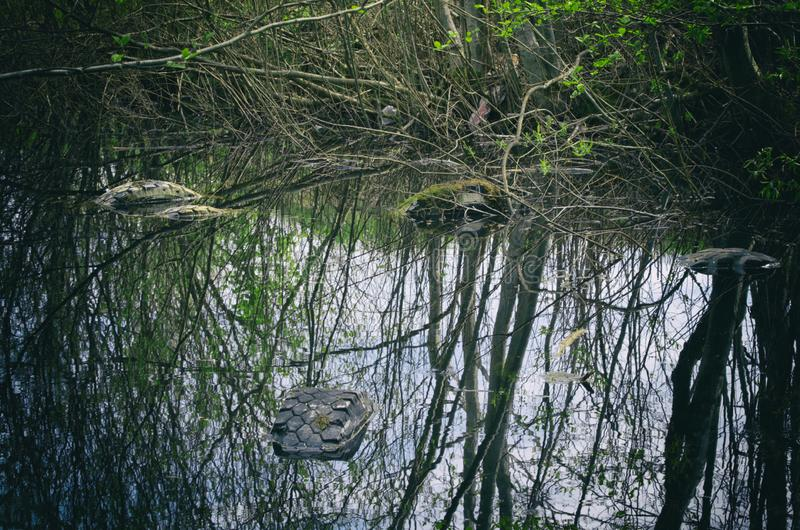 Used tires illegally flooded in a forest pond royalty free stock photography