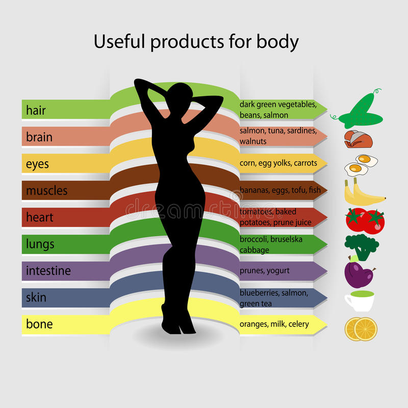 Useful products for body vector illustration