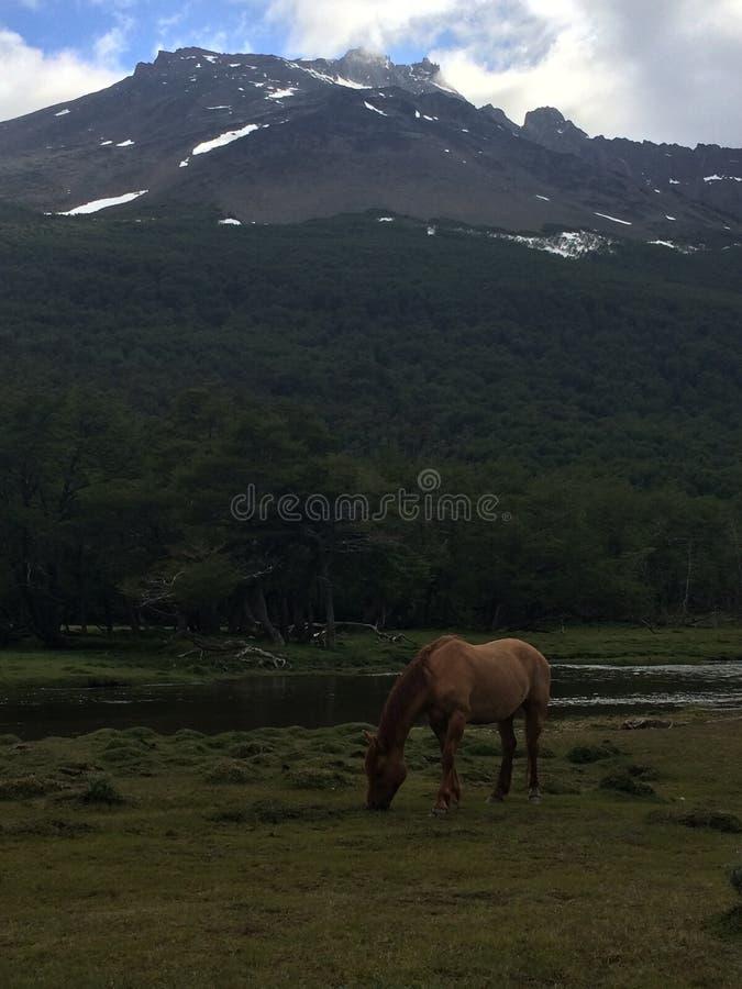 Ushuaia (Αργεντινή) στοκ εικόνες