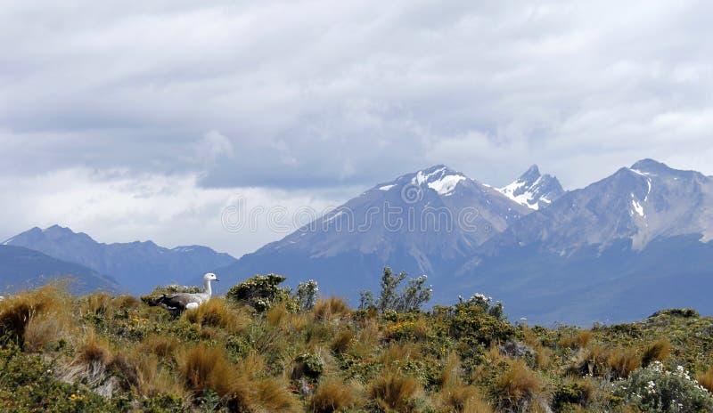 Download Ushuaia stock image. Image of cloud, daylight, travel - 25557135