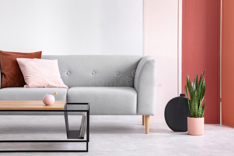 Usine à côté de divan gris avec le rose et d'oreiller rouge avec la table et l'écran Photo réelle photo stock