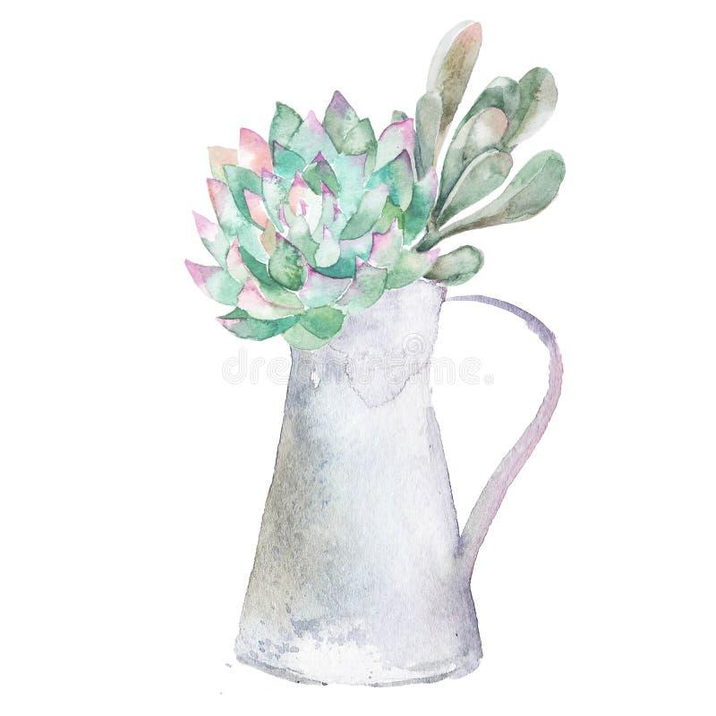 Usine à la maison succulente illustration stock