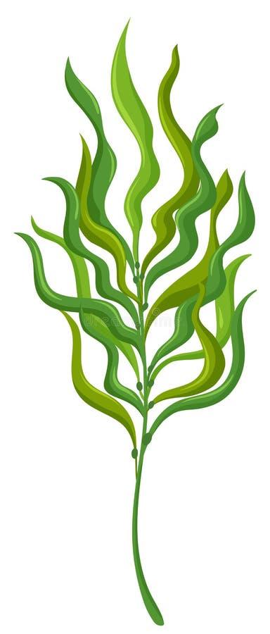 Usine avec de longues feuilles illustration de vecteur