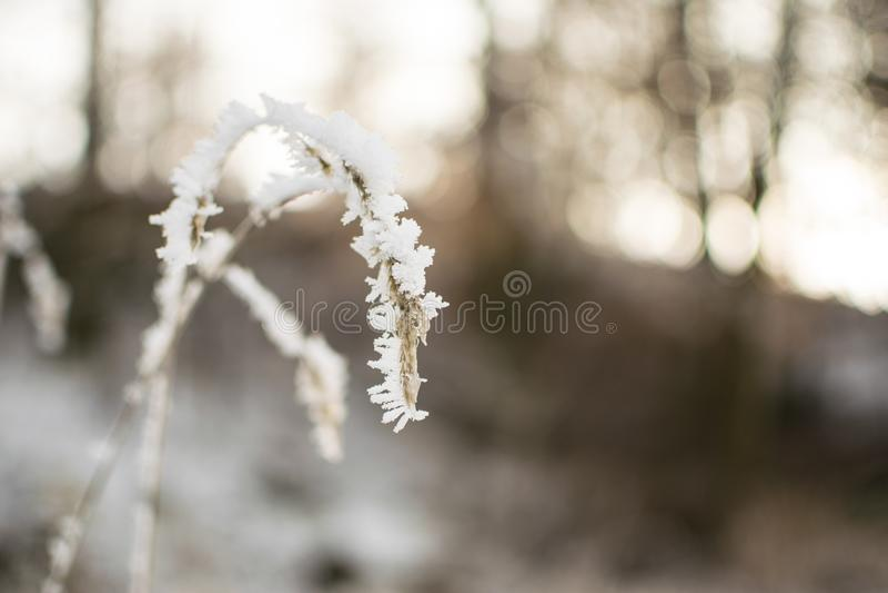 Usine congelée en hiver photos stock