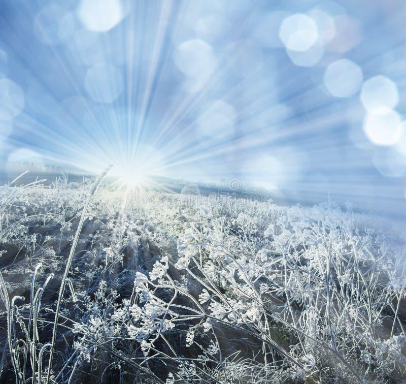 Usine congelée par hiver photos stock