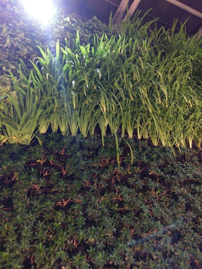 Usine d'herbe sur le mur photo libre de droits