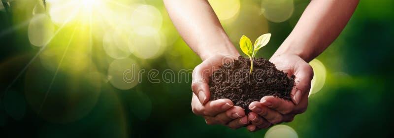 Usine dans des mains Concept d'écologie photo stock