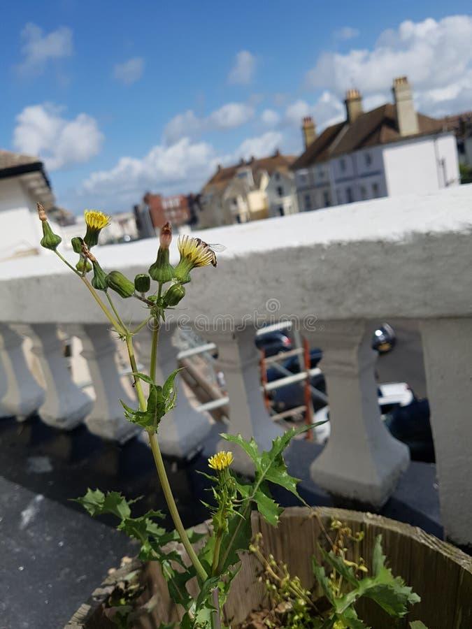 Usine de balcon image libre de droits
