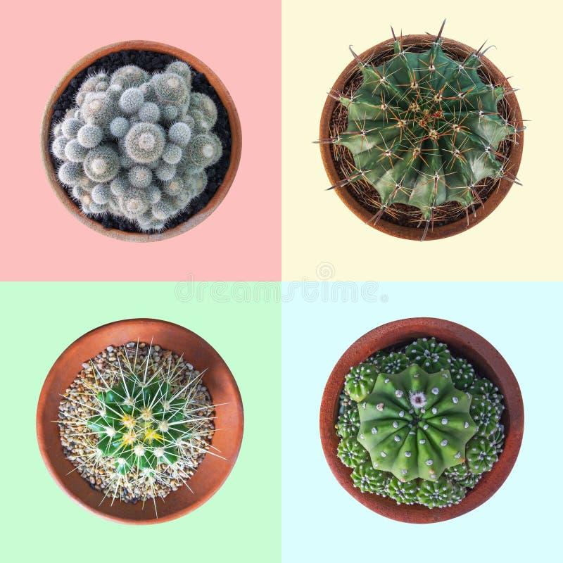 Usine de cactus dans la collection de vue supérieure de pot d'argile sur coloré en pastel image stock