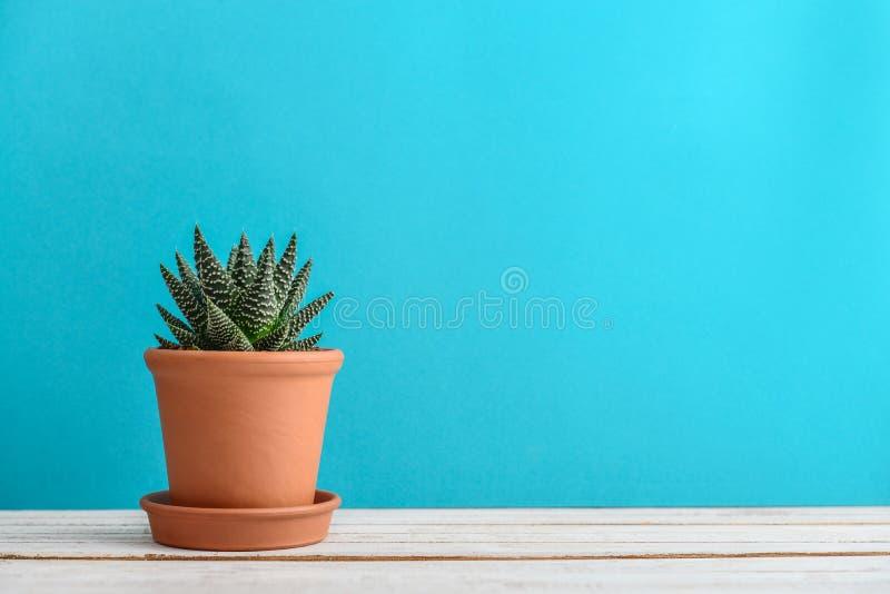 usine de cactus dans le pot de fleur photographie stock