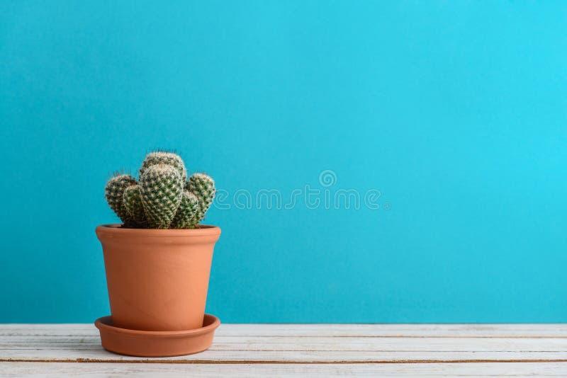usine de cactus dans le pot de fleur photos stock