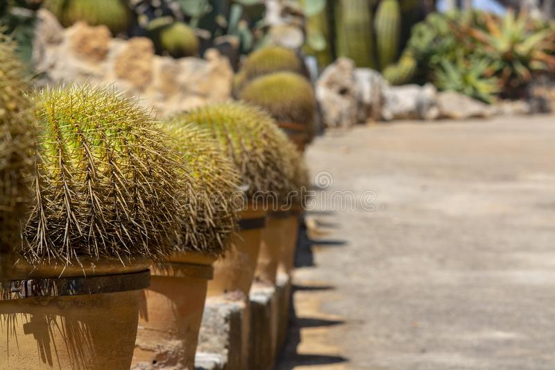 Usine de cactus dans le pot de terre cuite photos libres de droits