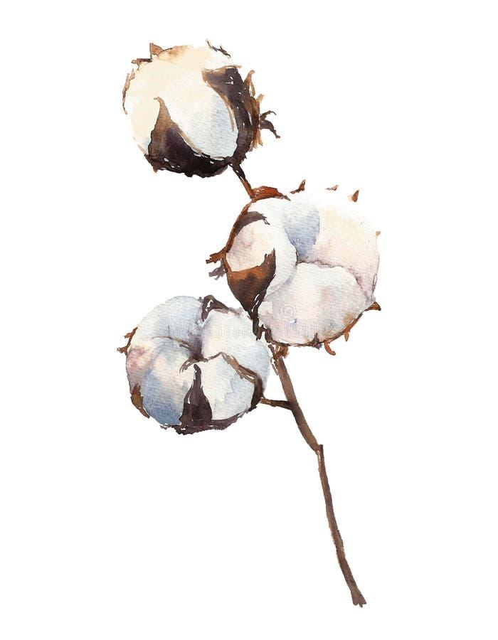 Usine de coton d'aquarelle, d'isolement sur le fond blanc illustration libre de droits