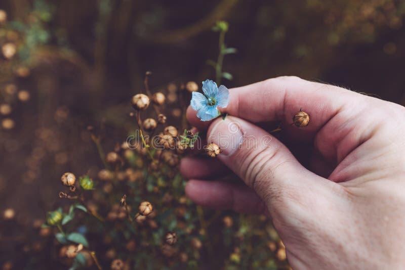 Usine de examen de lin d'agriculteur photographie stock libre de droits
