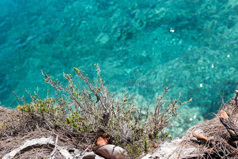 Usine de falaise de mer photo stock