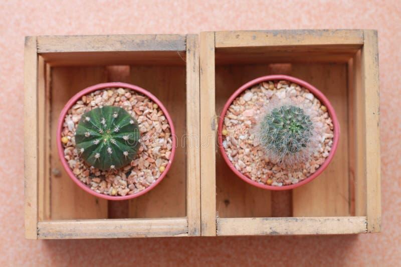 Usine de famille de cactus dans le pot en bois photographie stock