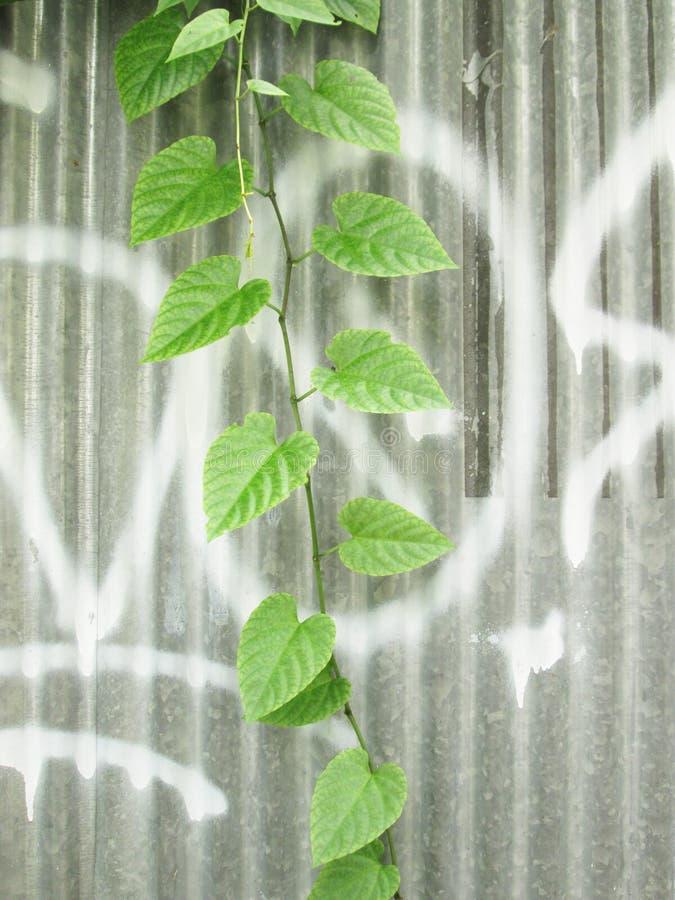 Usine de grimpeur sur le mur de plaque de métal de zince photographie stock