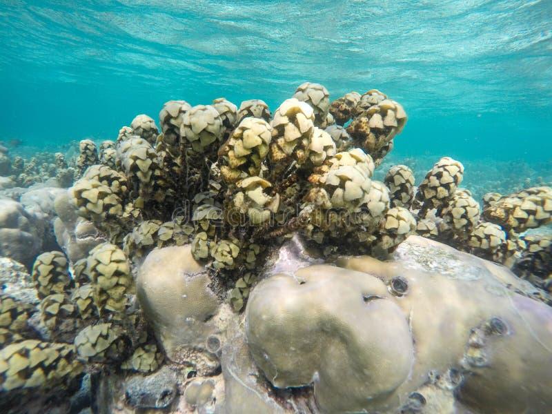 Usine de mer photo libre de droits