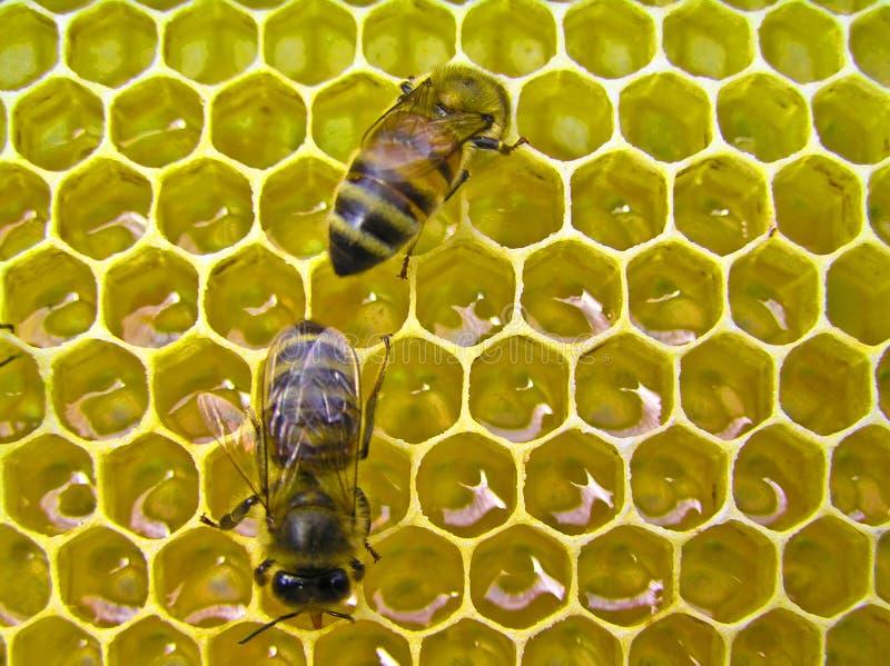 Usine de miel images stock
