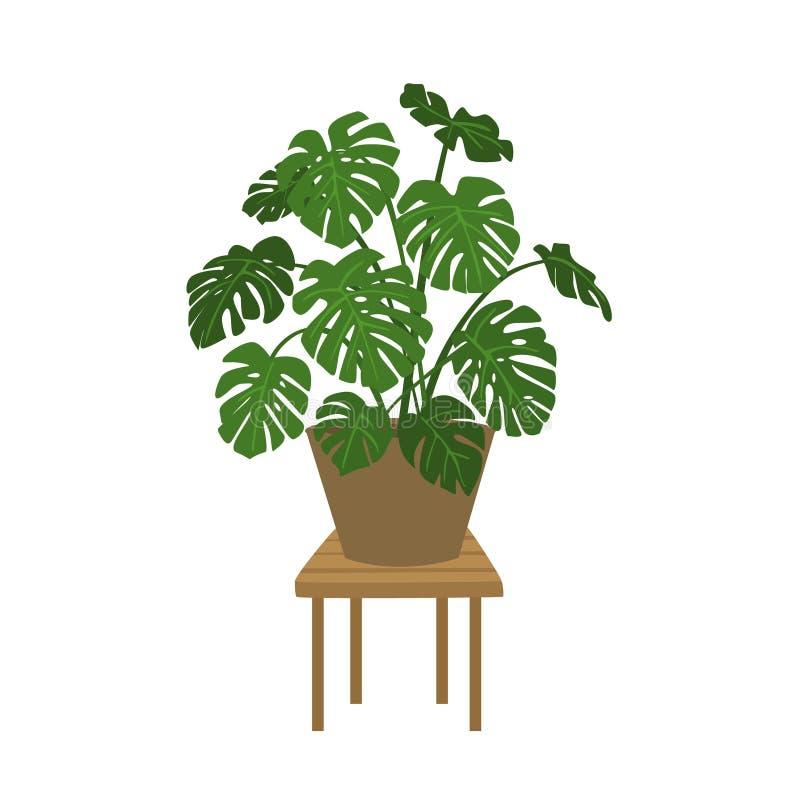 Usine de Monstera dans un vecteur d'isolement par pot illustration stock