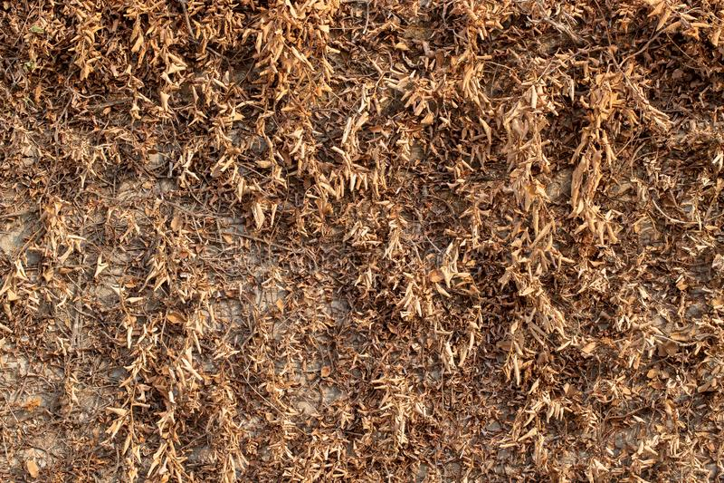 Usine de plante grimpante de Brown sur le mur blanc images libres de droits