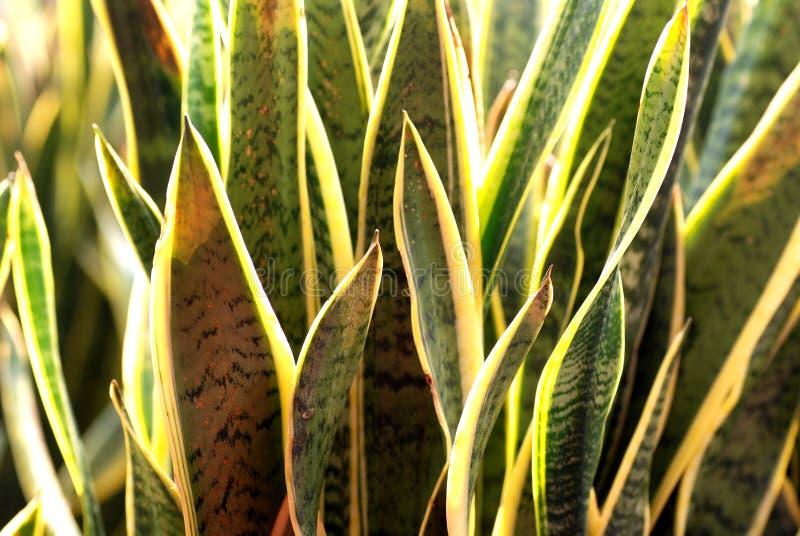 Usine De Serpent Image libre de droits