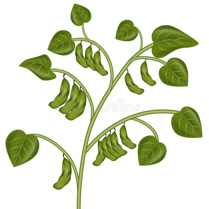 Usine de soja illustration stock