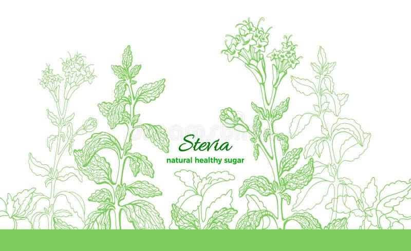Usine de Stevia E r r illustration de vecteur