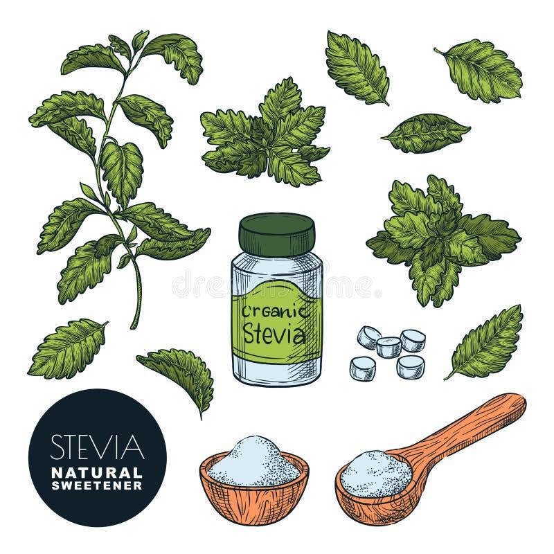 Usine de Stevia, feuilles, poudre et pilules de bouteille Illustration de croquis de vecteur Édulcorant naturel, alternative sain illustration stock