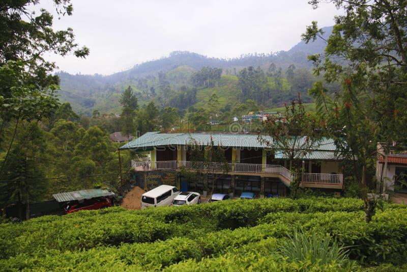 Usine de thé dans Nuwara Eliya Sri Lanka photo libre de droits