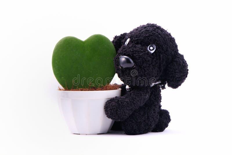 Usine en forme de coeur dans un pot de fleur avec le chien photo stock