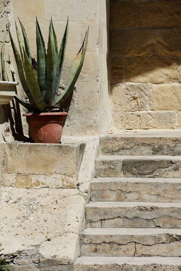 Usine et escaliers d'agave photos libres de droits