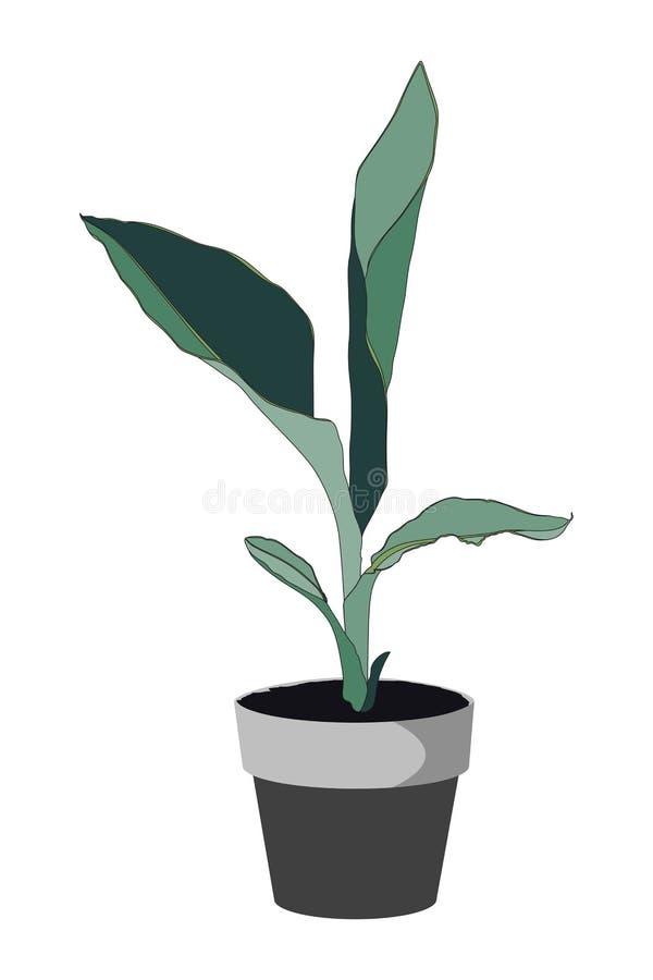 Usine exotique simple dans le pot Plante d'int?rieur dans des pots illustration de vecteur
